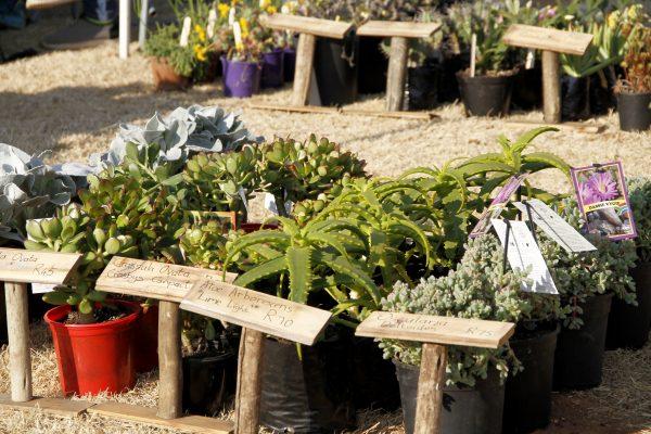 FICH-Market-Flowers
